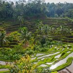 IMG_29395-UBUD-RICE-PADDIES-TOUR